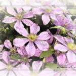 """Pink inked 4x6"" by TallyAnn"