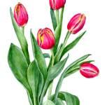 """""""Tulips friends"""" by NorikoF"""