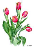 Tulips friends