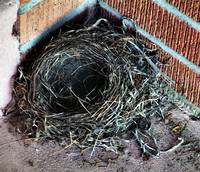 A Bird's Nest for Thought