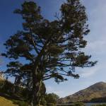 """Kylemore Lough Trees"" by damokeen"