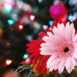 """""""Happy Vday!"""" by preetalina"""