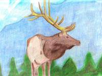 Elk in Pencil