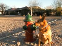 'BUDDY' standing by fire hydrant