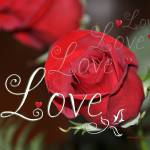 """For the Love of Roses"" by tricia"