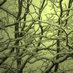 """Snowy Tangle Sylvan"" by bearseyephoto"