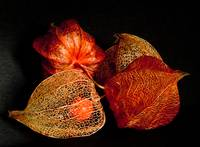 Chinese Lantern  Jewels