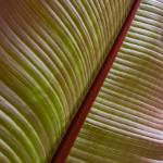 """Large Tropical Leaf"" by TonyDoddPhotography"