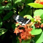 """""""Butterfly on Watercolor"""" by jmurdough"""