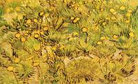 A Field of Yellow Flowers