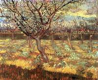 Apricot Trees in Blossom 2