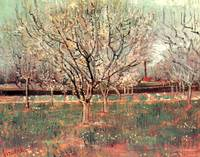 Orchard in Blossom Plum Trees