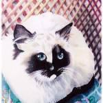 """Siamese Cat on Wicker"" by KarenStrumLLC"