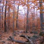 """Copper Trees"" by edhoopman"