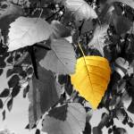 """""""Photography For Sale - Golden Birch Leaf Still Lif"""" by word1001"""