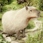 """Capybara"" by michaelortiz"