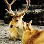 """Deer"" by damokeen"