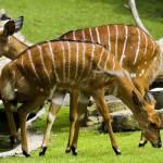 """White Striped Deer"" by damokeen"