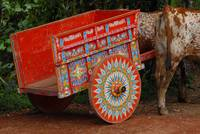 Vara Blanca Ox Cart
