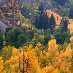"""ID SawtoothNRA, Trail Creek colors"" by eye4nature"