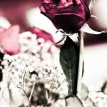 """""""Ageless Beauty"""" by eyesteel"""
