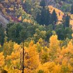 """ID SawtoothNRA TrailCrk fall colors 7858 drybrush"" by eye4nature"