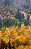 ID SawtoothNRA TrailCrk fall colors 7858 drybrush