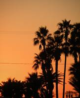 Palm Trees and Power Lines