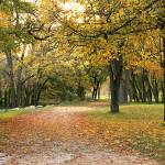 """""""Autumn in the Park"""" by BevMummery"""
