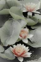 flowers2 gallery