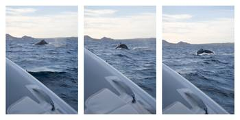 Humpback Surfacing Series
