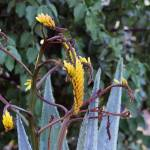 """""""Pretty Yellow Cactus Flowers"""" by MindsEyeImagery"""