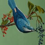 """blue bird"" by anthonydunphy"