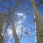 """""""autumn sky"""" by artbyaleksandra"""