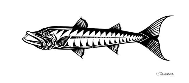 great barracuda by savanna great barracuda drawing