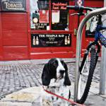 """""""Tied up in Temple Bar"""" by damokeen"""