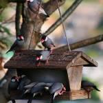 """""""Java Sparrow Night Club"""" by ericignacio"""