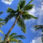 """Swaying Palm Trees"" by ericignacio"