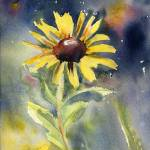 """Black-eyed Susan"" by sthieme"