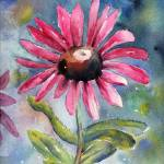 """Pink Sunflower"" by sthieme"