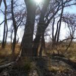 """Tree Silhouettes"" by AquarianEye"