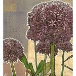 """""""Modern Florals: Allium Blossom"""" by karynlewis"""