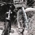 """Beach Bikes"" by jasonhensley"
