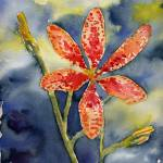 """Blackberry Lily"" by sthieme"