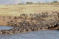 gnus crossing mara