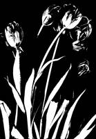 Black & White Tulips