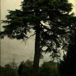 """stirling tree ttv"" by outofthebox"
