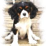 """Cavalier Puppy - Dinadan"" by lindacarroll"