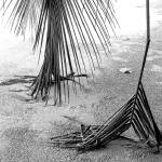 """Palm Fronds"" by ChrisMarshall"