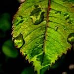 """""""Leaf 1"""" by PenelopeJolicoeur"""